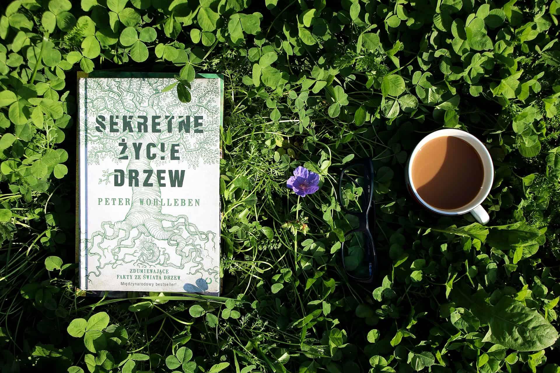 """#26 Książka do kawy – """"Sekretne życie drzew"""""""